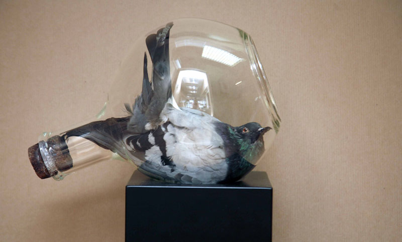 Polly Morgan, 'M.S. Found in a Bottle', 2008, Glass, plinth, pigeon, 110x32x25cm